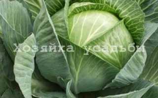 Чем полезна капуста белокочанная, полезные и лечебные свойства