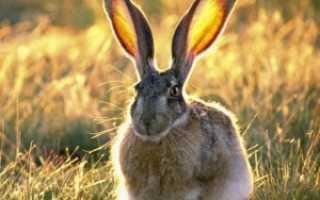 Как защитить яблони от зайцев, советы начинающим садоводам
