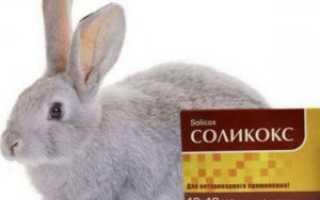 Кокцидиостатики для кроликов при лечении и профилактике кокцидиоза