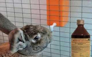 Молочная кислота для кроликов: для чего и как давать