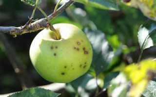 Обработка яблонь от вредителей: сроки, выбор препаратов, особенности проведения работы, советы и рекомендации опытных садоводов
