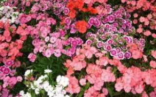 Лучшие засухоустойчивые цветы и растения для клумбы на солнечном участке