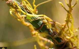 Виды сорняков и их классификация